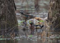 WOOD DUCK CITY HUNTING & REC LAND