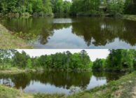 CABIN, LAKE, & TREE FARM FOR SALE IN DALE COUNTY
