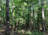 Beautiful Wooded Home Sites